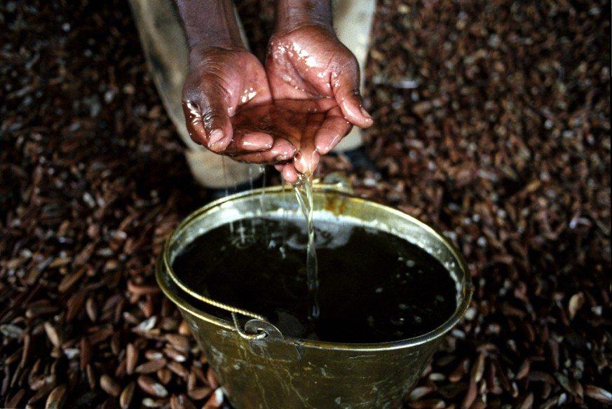 CT- Babassu oil from Brazil
